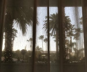 california, curtains, and palm trees image