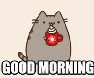 cat, good, and morning image