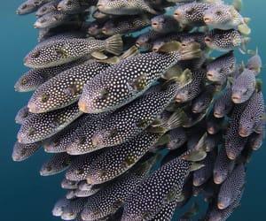 mar, naturaleza, and Animales image