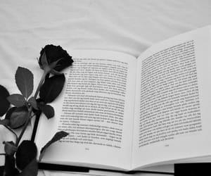 black, black and white, and black rose image