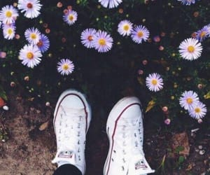 flowers, photography, and shoes image