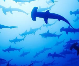 aesthetic, sharks, and blue image