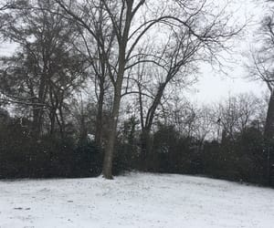 nature, snow, and trees image