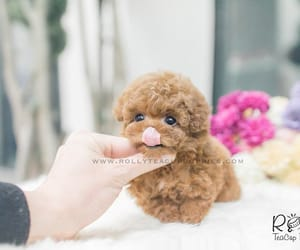 hello, puppies, and puppy image