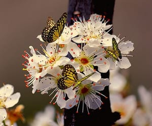 Animales, belleza, and flores image