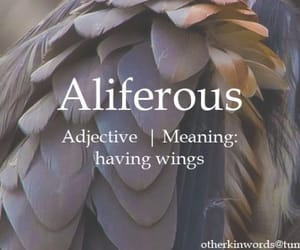 aesthetic, angel, and wings image