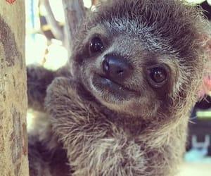 sloth, animal, and baby image
