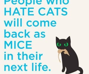 cat, life, and mice image