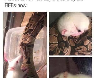 snake, mouse, and funny image
