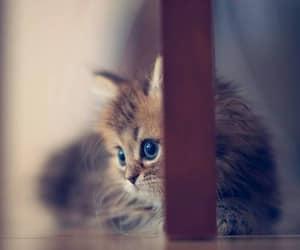 pretty, catt, and window image