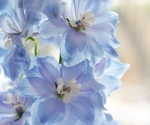 flowers, nature, and beauty image