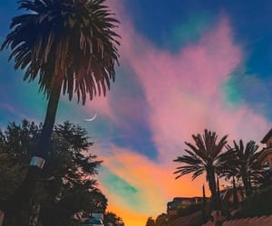 beautiful, inspiration, and palm trees image