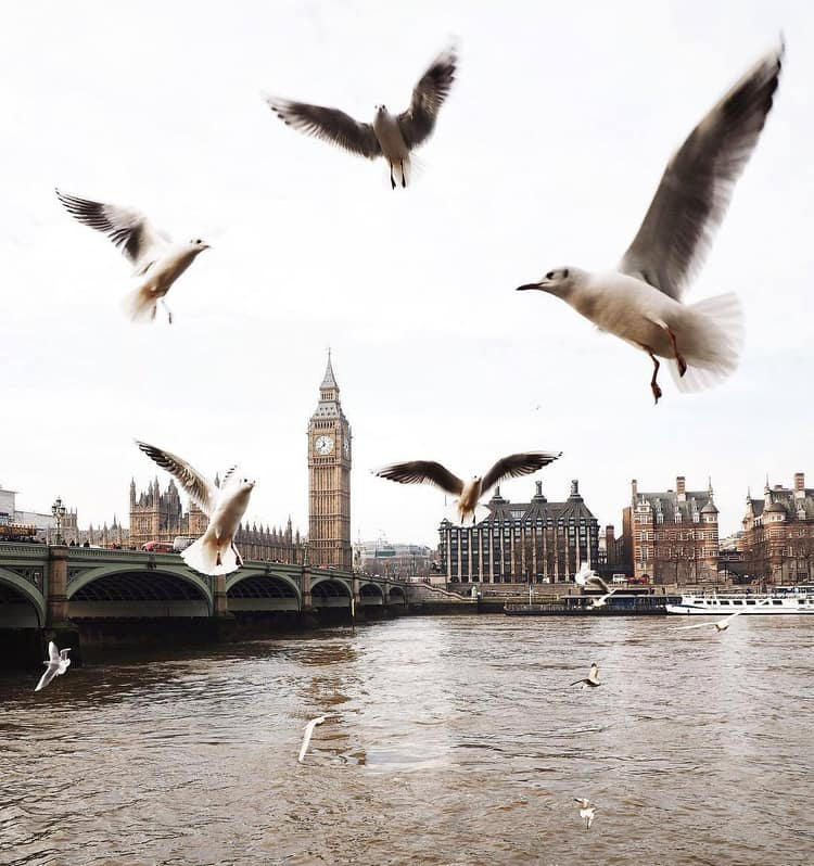 article, London bridge, and tea image
