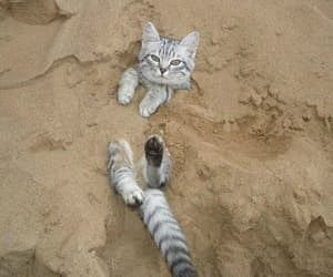cat, cute, and beach image