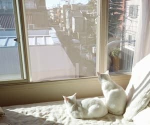 cat, white, and window image