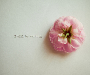 flower, pink, and quote image