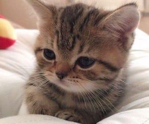 lovecats, ًًًًًًًًًًًًً, and catstagram image