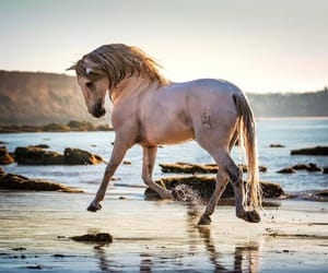 beach, horse, and royal image