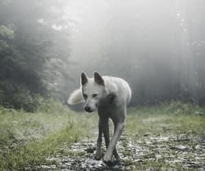 animal, white, and fantasy image