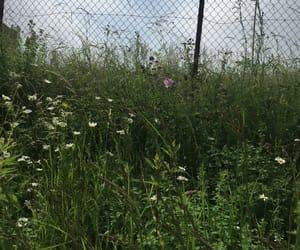 alone, grass, and beautiful image