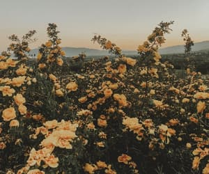 flowers, yellow, and sunset image