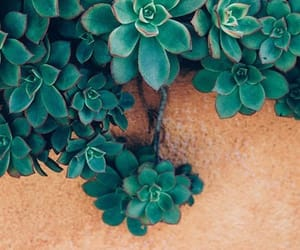 wallpaper, plants, and nature image