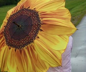 sonnenblume and regenschirm image
