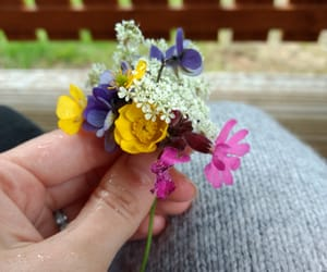 colour, flowers, and hand image