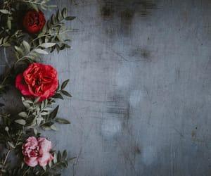beautiful, rose, and gulab image