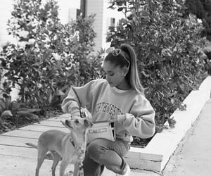 adorable, Toulouse, and cute image
