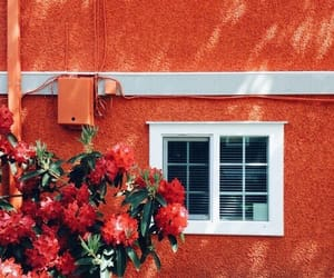 red, flowers, and orange image