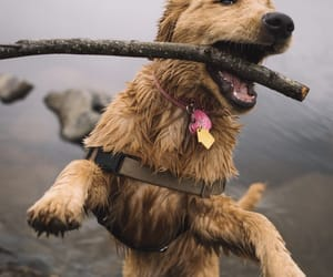 doggo, cute, and shutterklick image