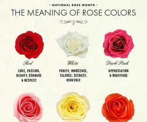 colours, meaning, and roses image