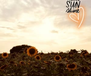 background, sunflower, and Sunny image