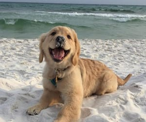 dog, puppy, and beach image