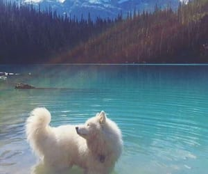 adorable, pacific, and huskey image