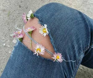 daisy, flower, and jeans image