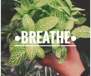 breathe, leaves, and plants image
