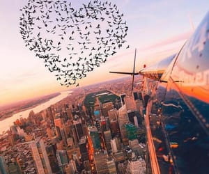 city, bird, and heart image