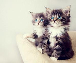 aw, cuties, and blue image