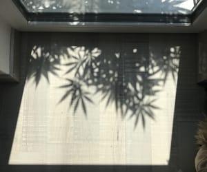 light, plants, and shadow image