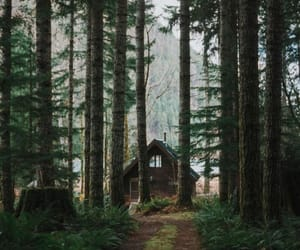 nature, forest, and home image
