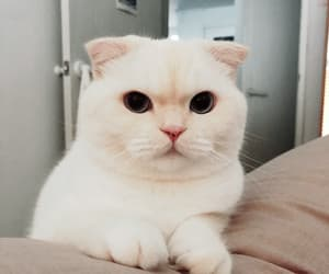 cat, soft, and cute image