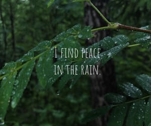 forest, peace, and quotes image