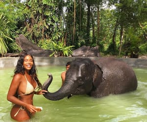 animal, elephant, and beauty image