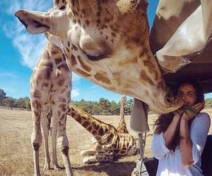 animals, giraffa, and giraffe image