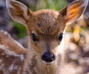 animal, fawn, and animals image
