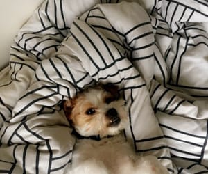 aesthetic, animal, and bed image