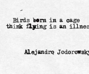 quotes and bird image