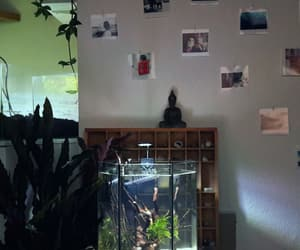 aquarium, fishtank, and interior image